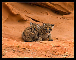 18487DSC6671-Two-Cat-Rock.jpg
