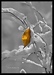 18487Vestige-of-Autumn.jpg