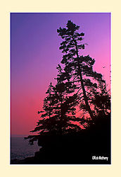 12017Tree-Silhouette5aS2.jpg