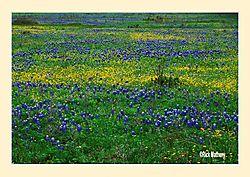 12017Huisache-Daises-_-Bluebonne.jpg