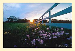 12017Roadside-SunsetS2.jpg