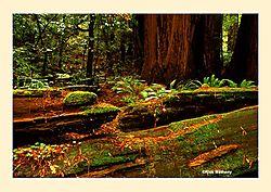 12017Muir-Woods14NS2.jpg