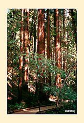 12017Muir-Woods2S2.jpg