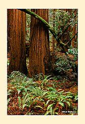12017Muir-Woods3NS2.jpg