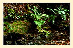 Muir_Woods10NS2M.jpg