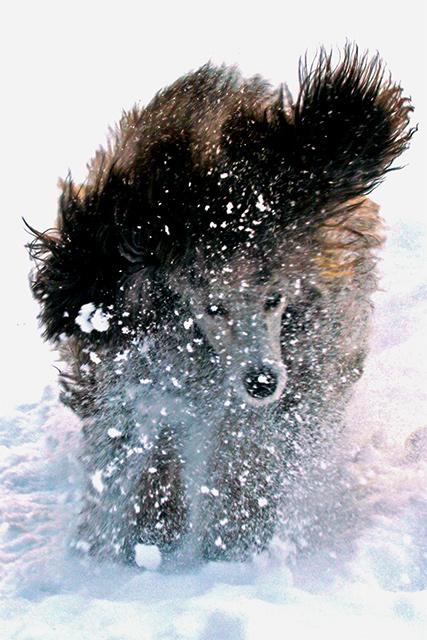 15882gilda_snow_4