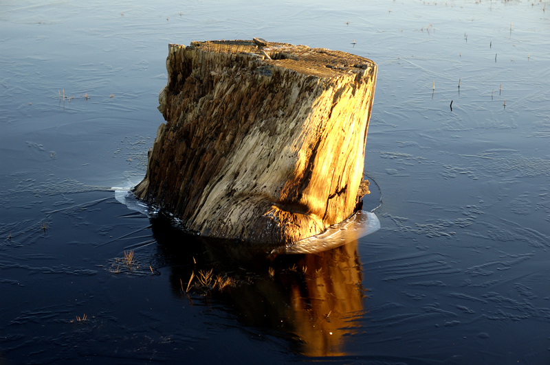 17668Log-Iceburg_DSC2124