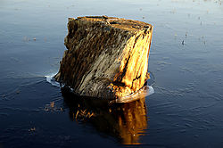 17668Log-Iceburg_DSC2124.jpg