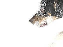 21306dog-in-the-snow.jpg