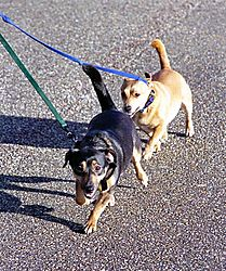 22605C41_2_walking-the-dogs1.jpg