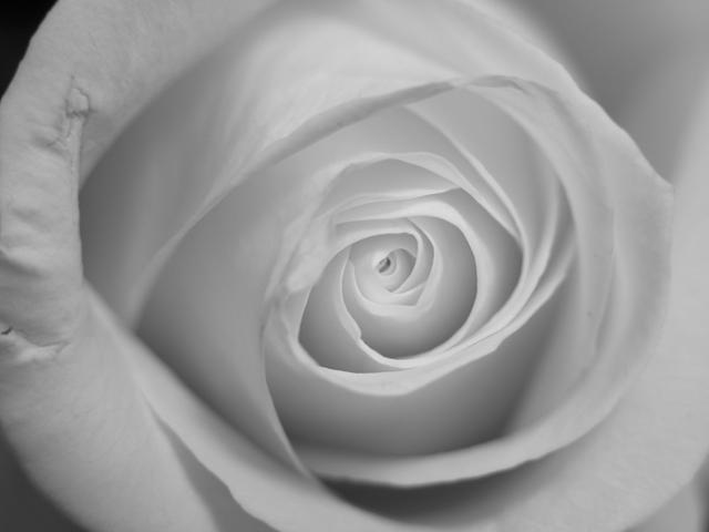 25107B_W_Rose_adj
