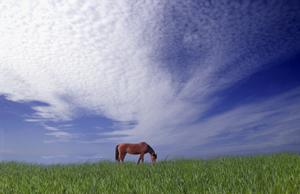Wolkenstimmung_Kopie