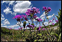 13widewildflowers.jpg