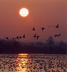 15464Inflight_Sunrise_3-18-05-Nikonians.jpg