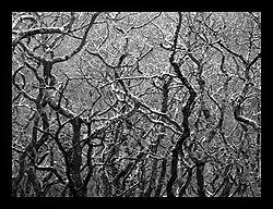 10224Bare-Trees.jpg