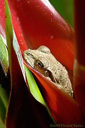 12553Tree_Frog_Red_Bird.jpg