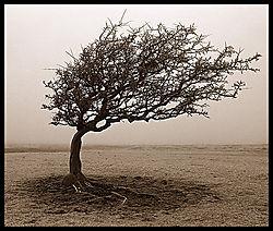 10224Tree-in-Fog3.jpg