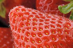 8718Strawberry.jpg