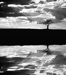 24691Lonely_Tree_Sunset_Refl.jpg