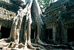 27663angkor_tree.jpg