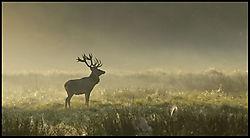 25635red_deer2_filtered.jpg