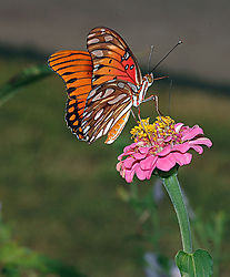 17965orange-butterfly-contest.jpg