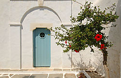 29511tree_and_door2.jpg