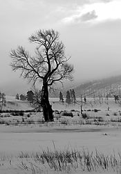 12938winter-treeb_w.jpg