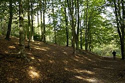29511a_walk_in_the_woods_2.jpg