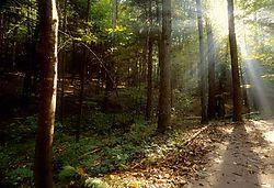 36498Morning_in_the_woods.jpg