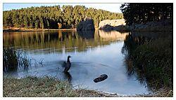 5736Morning_DuckNet.jpg