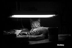 12017My_Cat_B_W.jpg