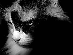 77314Turtle_Cat_-_Nov_2002_Large_.jpg