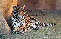10342leopardo-pastora-zoo.jpg