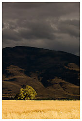 15682Pray_Montana_2.jpg