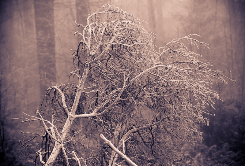 0612Dalby_Winter001
