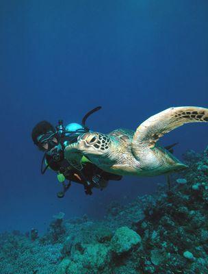 53699Son_with_Green_Turtle_Gary_Brennand_Underwater_6