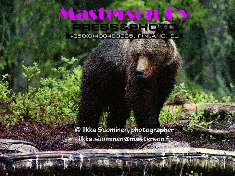 BearBoy02_big