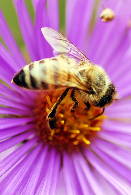 Bee_22