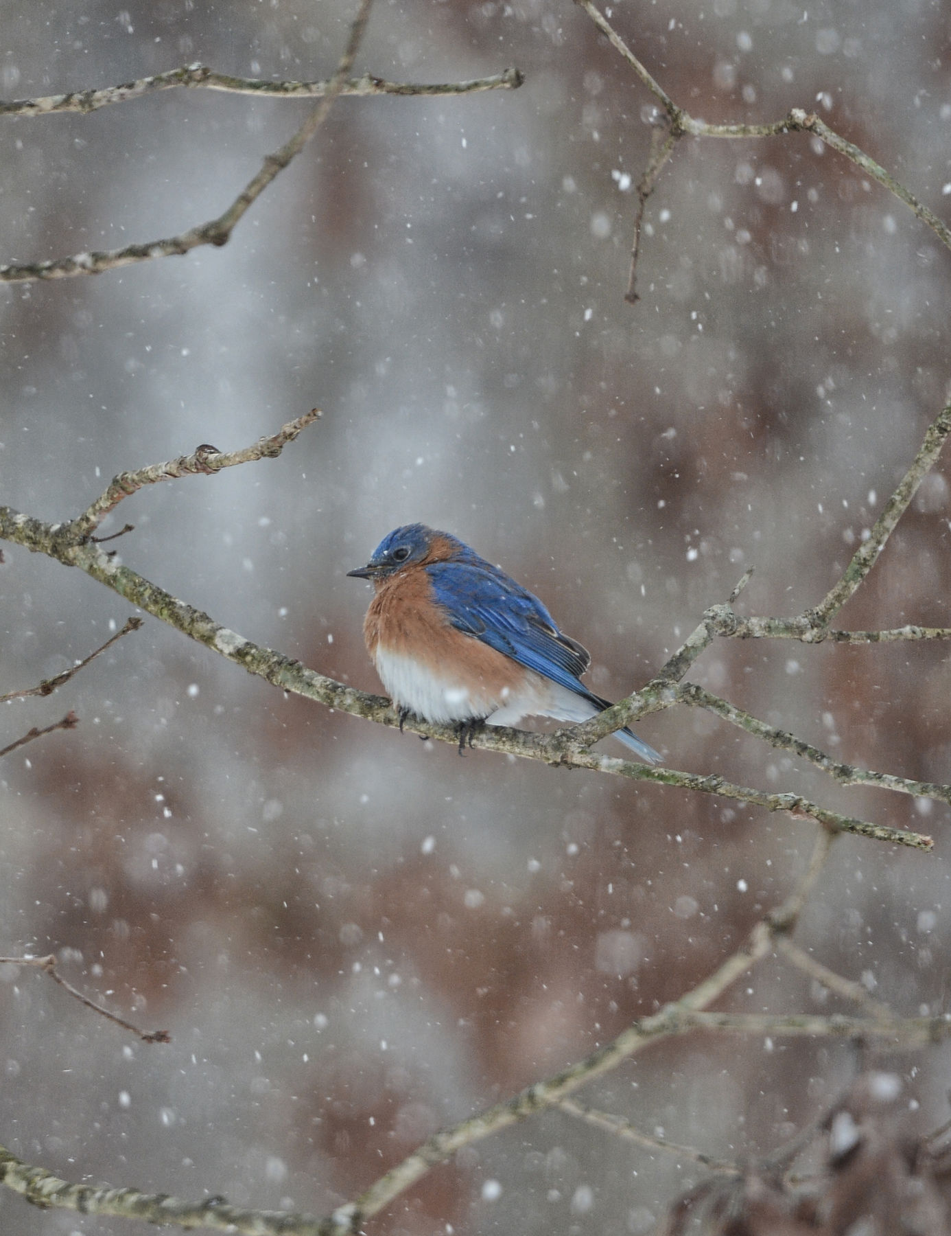Bluebird_Snow_Storn_1_7_2017_Photo_7