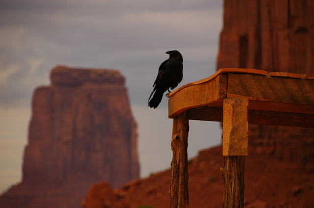 Crow_at_Monument_Valley-1