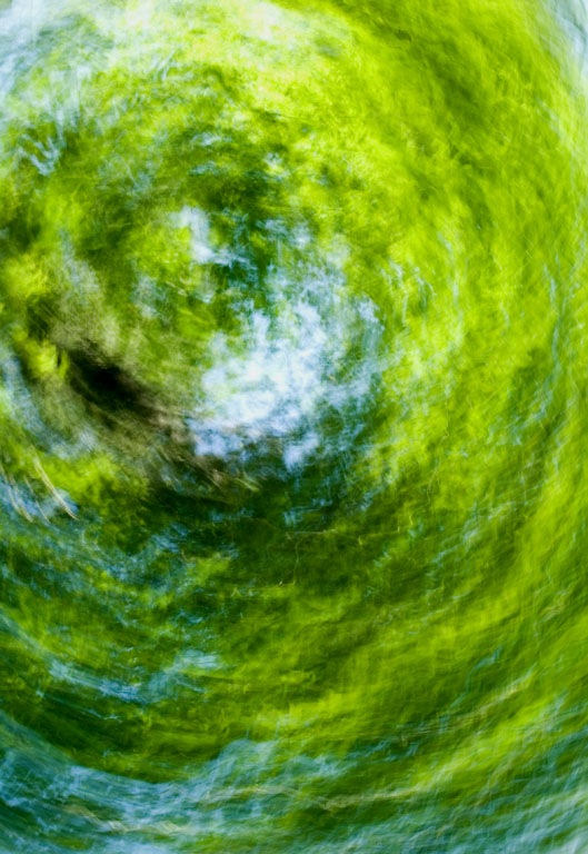DC_Tree_Abstract_11