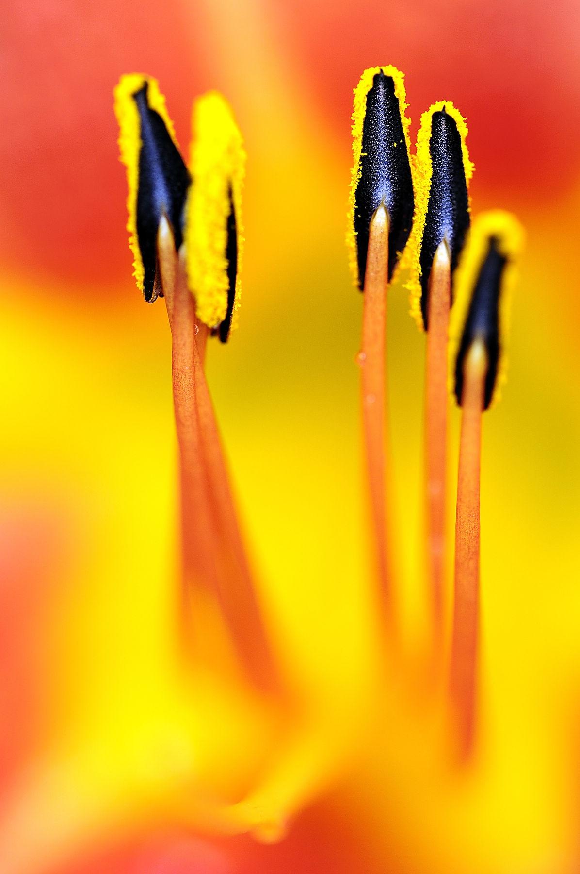 Flowers_DSC8199_022
