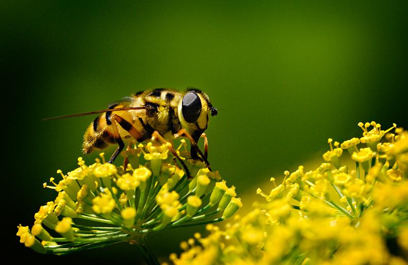 Fresh_Nectar