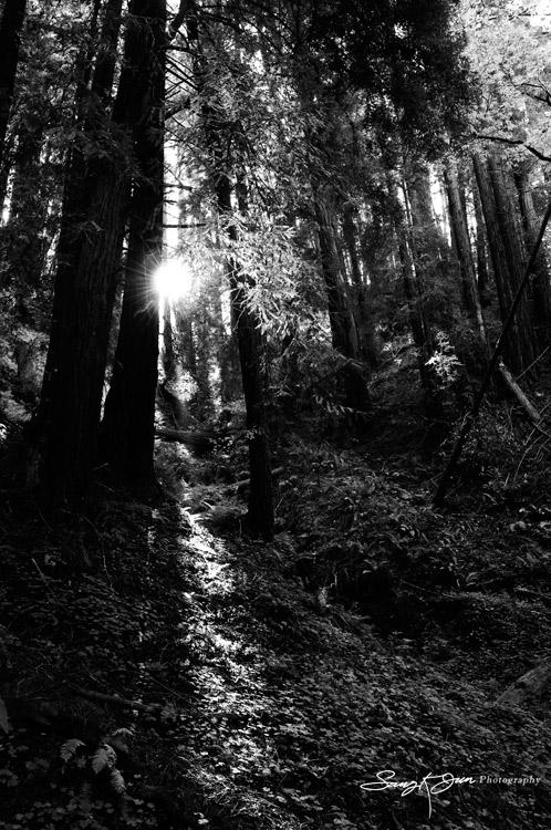 Light-through-Trees-behind-Bixby-brid-_9009