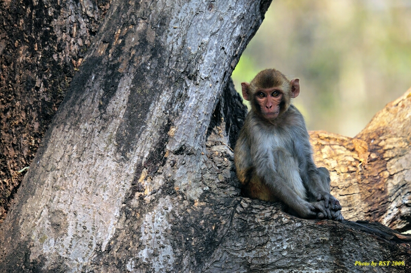 RST_D300_0122India_22_03_