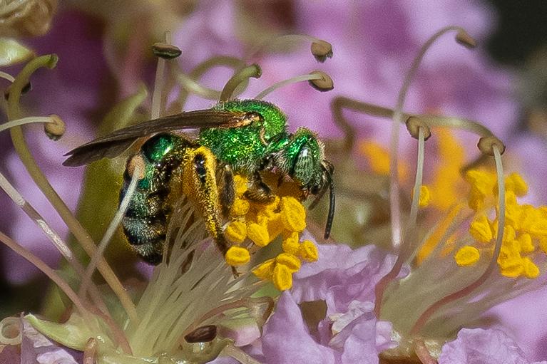 The_Green_Hornet