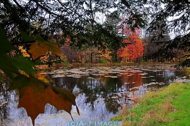 autumn_reflections1