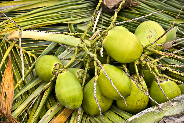 coconuts_as_Smart_Object-1
