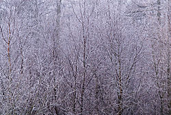 0612Dalby_Winter002.jpg